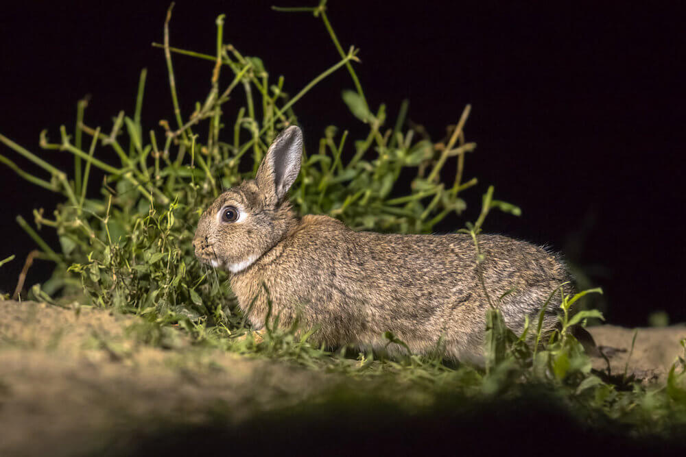exterior lighting startling a rabbit